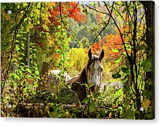 Acrylic Print featuring the photograph Are You My Friend? by Jeff Folger