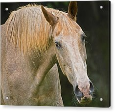Are You Taking My Picture Acrylic Print by Susan Leggett