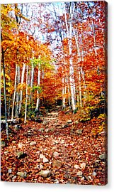 Arethusa Falls Trail Acrylic Print by Greg Fortier