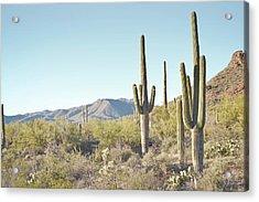 Arizona Cactus Blue Sky Landscape Acrylic Print by Andrea Hazel Ihlefeld