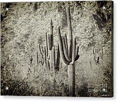 Arizona Desert 2 Acrylic Print