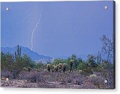 Arizona Desert  Acrylic Print by James BO  Insogna