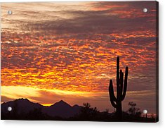 Arizona November Sunrise With Saguaro   Acrylic Print