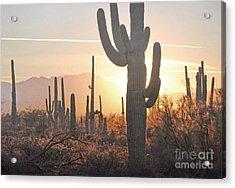 Arizona Saguaro Cactus Sunset Desert Landscape Acrylic Print by Andrea Hazel Ihlefeld