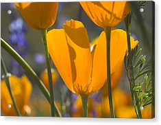 Arizona Spring Color Acrylic Print