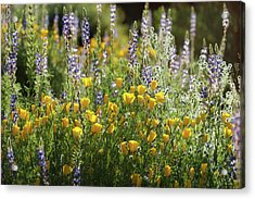 Acrylic Print featuring the photograph Arizona Spring Wildflowers  by Saija Lehtonen