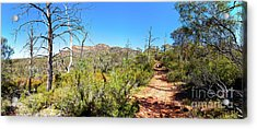 Acrylic Print featuring the photograph Arkaroo Rock Hiking Trail.wilpena Pound by Bill Robinson