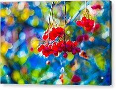 Acrylic Print featuring the photograph Arrowwood Berries Abstract by Alexander Senin