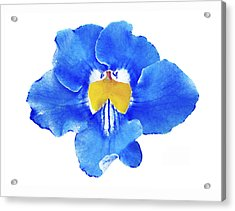 Art Blue Beauty Acrylic Print