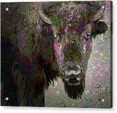 Acrylic Print featuring the mixed media Art Neuvo Bison by Irma BACKELANT GALLERIES