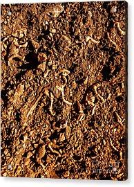 Art Of A Dinosaur Dig Acrylic Print