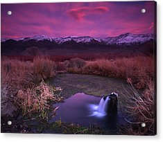 Artesian Sunset Acrylic Print by Chris Morrison