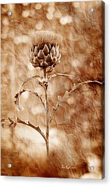 Artichoke Bloom Acrylic Print