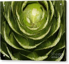Artichoke Close-up Acrylic Print by Carol Groenen