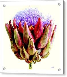Artichoke In Bloom Acrylic Print