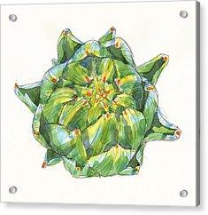 Artichoke Star Acrylic Print