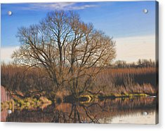 Artistic Creek Tree  Acrylic Print by Leif Sohlman