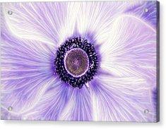 Artistic Poppy Anemone Acrylic Print