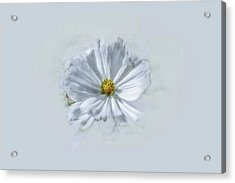 Acrylic Print featuring the photograph Artistic White #g1 by Leif Sohlman