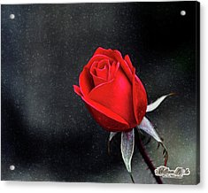 Acrylic Print featuring the photograph Artists Red Rose by William Havle
