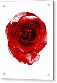 Artpaintedredrose Acrylic Print