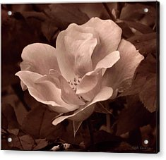 Artsy Flower Acrylic Print