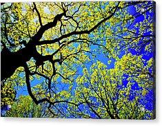 Artsy Tree Canopy Series, Early Spring - # 01 Acrylic Print