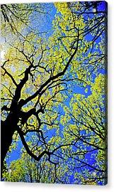 Artsy Tree Canopy Series, Early Spring - # 02 Acrylic Print