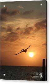 Aruba Pelican II Acrylic Print by Paula Deutz