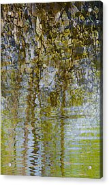 As If A Canopy Acrylic Print by Sean Holmquist