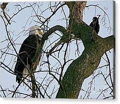 As The Eagle Looks On Acrylic Print by Sue Stefanowicz