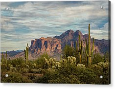 Acrylic Print featuring the photograph As The Evening Arrives In The Sonoran  by Saija Lehtonen