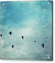 As The Ravens Fly Acrylic Print by Priska Wettstein