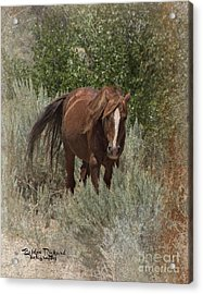 As The Wind Blows Acrylic Print by Bobbee Rickard
