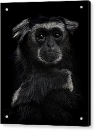 As Time Goes By Acrylic Print by Paul Neville