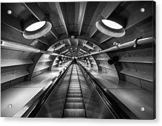 Ascending Acrylic Print by Chris Fletcher