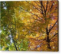 Acrylic Print featuring the photograph Ashland Autumn by John Norman Stewart