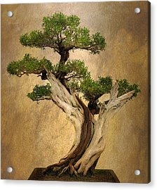 Asian Bonsai Acrylic Print by Jessica Jenney