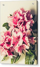 Asian Floral Rhododendron Flowers Acrylic Print by Jorgo Photography - Wall Art Gallery