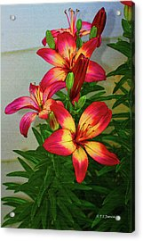 Asian Lilly Spring Time Acrylic Print