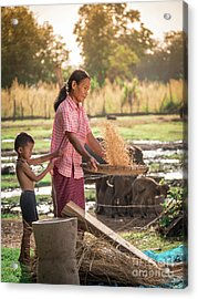 Asian Women Winnow Rice Rice Separate Between Rice And Rice Chaf Acrylic Print by Tosporn Preede