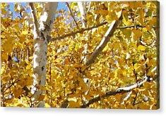 Aspen 2 Acrylic Print