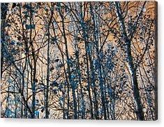 Aspen  Acrylic Print