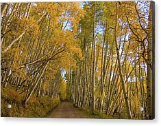 Acrylic Print featuring the photograph Aspen Alley by Steve Stuller