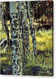 Aspen Bark Acrylic Print