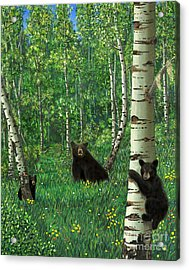 Aspen Bear Nursery Acrylic Print by Stanza Widen