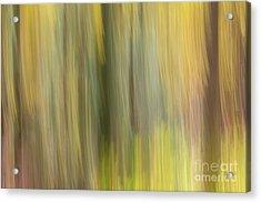 Aspen Blur #2 Acrylic Print