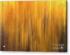 Aspen Blur #5 Acrylic Print