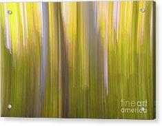 Aspen Blur #6 Acrylic Print
