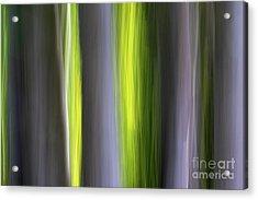 Aspen Blur #7 Acrylic Print
